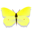 yellow butterfly lemon grass on white background vector image vector image