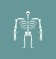 human skeleton isolated skull and bones spine and vector image vector image