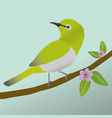 japanese white-eye bird vector image vector image