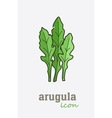 Arugula icon Vegetable green leaves vector image