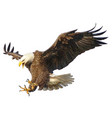 bald eagle attack hand draw and paint on white vector image