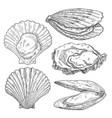 scallop mussel and oyster vintage monochrome vector image