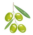 green realistic olives vector image