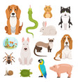 big set different domestic animals cats vector image vector image