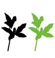 Bishops weed vector image