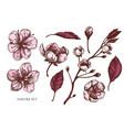 collection hand drawn colored sakura vector image vector image