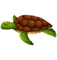 green sea turtle white background vector image vector image