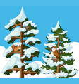 Squirrel and owl on pine tree covered with snow