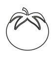 tomato vegetable isolated icon vector image