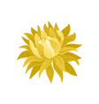 beautiful blooming flower with yellow petals vector image vector image