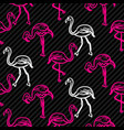 black and pink striped flamingo bird pattern vector image