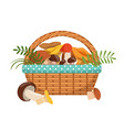 different fresh mushrooms in basket vector image vector image
