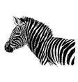 Hand sketch zebra side vector image vector image