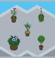 isometric houseplant set of houseplant blossom vector image