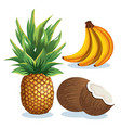 set tropical fresh fruits vector image vector image