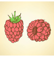 Sketch tasty raspberry in vintage style vector image vector image