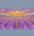 provence landscape with lavender field vector image vector image
