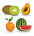 set tropical fresh fruits vector image