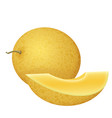 whole and slice fresh honeydew melon vector image