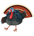 a turkey on white background vector image