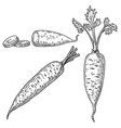 carrots in engraving style design element for vector image