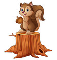 cartoon squirrel standing on tree stump holding an vector image