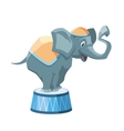 Circus elephant vector image