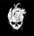 skull heart vector image vector image