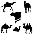 CamelSet vector image