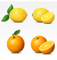 Collection of fruits vector image vector image