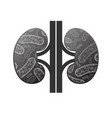 kidneys with bacterium vector image vector image