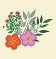 nasturtium leaves decorative image vector image
