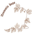 pencil hand drawn of hop branch with cones with vector image vector image