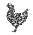 chicken in engraving style design element vector image vector image