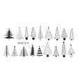 collection various firs pines or spruces drawn vector image vector image