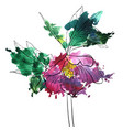 drawing flower of hellebore vector image vector image