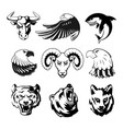 heads animals for logo or sport symbols vector image