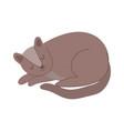 brown pet cat feline sleeping character isolated vector image vector image