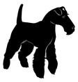 fox terrier vector image