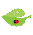 Green leaf with drops of dew and ladybird vector image