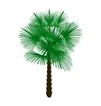 Green palm tree isolated on white background vector image vector image