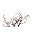 Branch vector image
