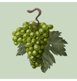 Cluster of grapes with a leaf vector image