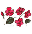 collection of hand drawn colored impatiens vector image