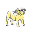 english bulldog hand drawn isolated icon vector image