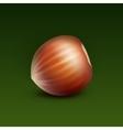 Full Unpeeled Hazelnut on Green Background vector image vector image