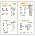 nutrition fact of mushroom set hand drawn vector image vector image