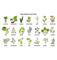 collection of best herbs for heart disease vector image vector image