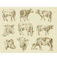 cows hand draw vector image vector image