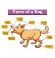 Different parts of domestic dog vector image vector image